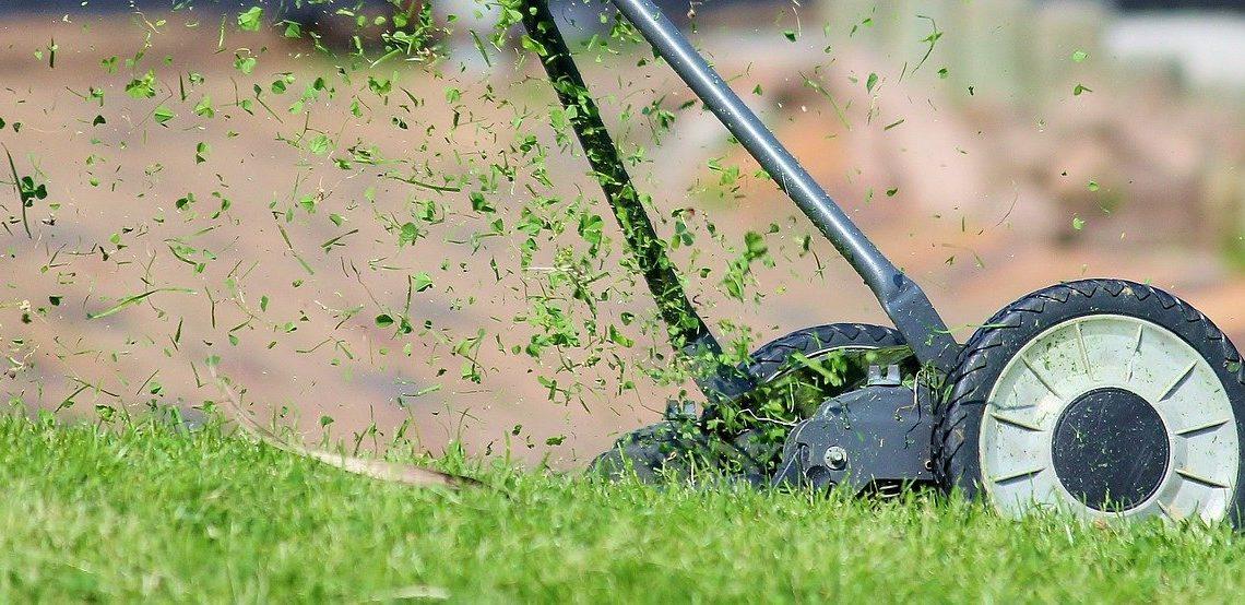 Tipps zur Rasenpflege