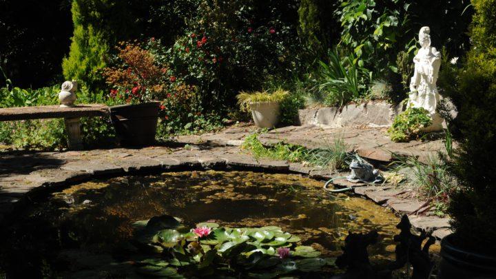 Gartenteich anlegen – Darauf sollten Sie achten