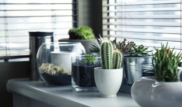 Wohngesundheit durch Fenster