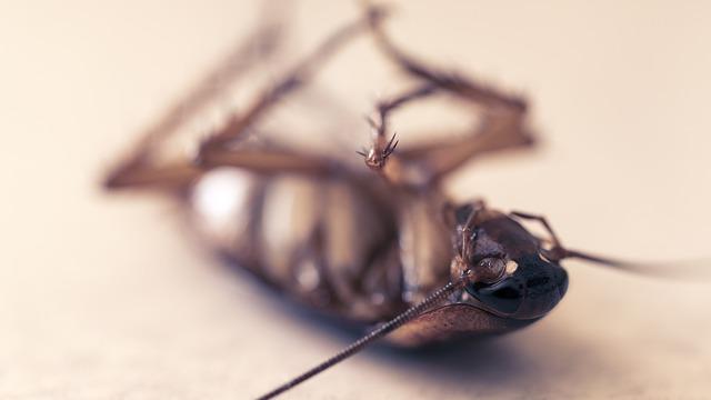 Einen Schädlingsbefall im Eigenheim verhindern